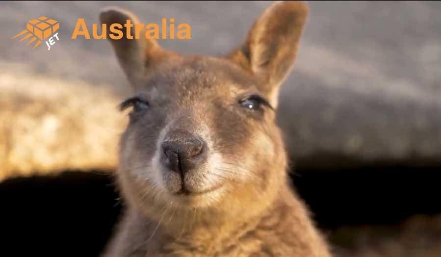 jet-australia-wildlife